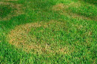 Болезни газонных трав.