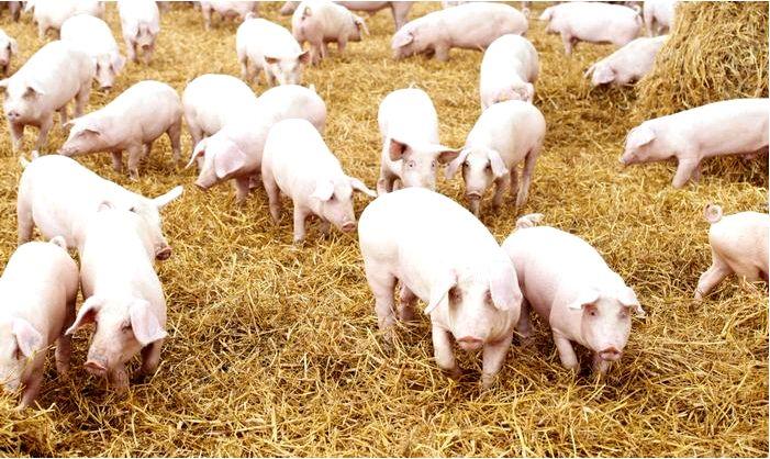 Подраздел по мясному животноводству появится в госпрограмме развития